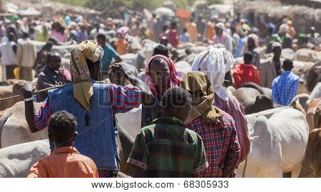 Babile. Ethiopia - December 23, 2013: Brahman Bull, Zebu And Other Cattle For Sale At One Of The Lar