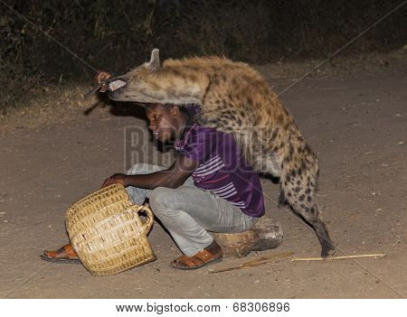 Harar, Ethiopia - December 23, 2013: An Unidentified Man Feeds A Spotted Hyena (crocuta Crocuta) In