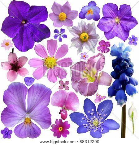 Collection Of Blue, Purple Flowers Isolated On White Background