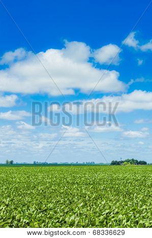 Beautiful Countryside Field