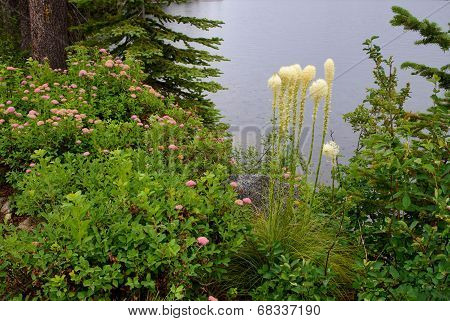 Bear Grass and Spirea Bloom by Lake
