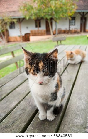 Cat enjoy country life - vintage stock photo