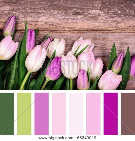 A closeup of pink and purple tulips over old wood background, in a colour palette with complimentary colour swatches