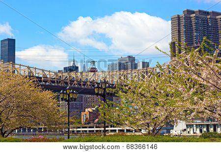 Roosevelt Island Tramway and Queensboro Bridge in blooming season.