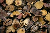 Stack of firewood - Wooden abstract background poster
