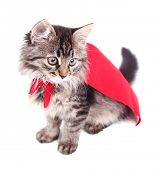 Cat in red cloak, isolated on white.  poster
