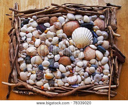 Seashells, Sea Shells! With Pebbles, Driftwood And Stones.