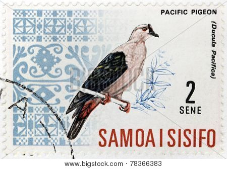 Pacific Pigeon