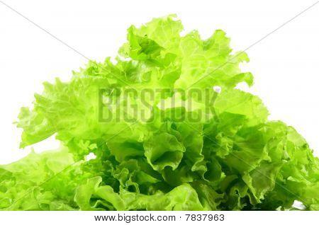 fresh salad isolated on white background