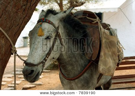 the donkey under three