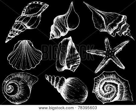 Hand Drawn Collection Of Various Seashell Illustrations Isolated On Black Background