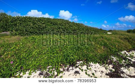 Shore was covered with vegetation. Cayo Guillermo. Cuba. poster