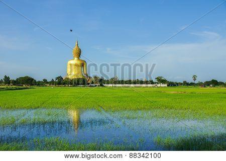 Back Of Buddha Image