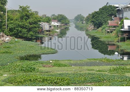 Many Water Hyacinth In Canal Made Water Pollution