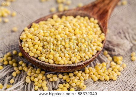 Organic Millet Seeds In A Spoon Closeup