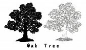 Oak Tree with Leaves and Grass Black Silhouette, Contours and Inscriptions Isolated on White Background. Vector poster