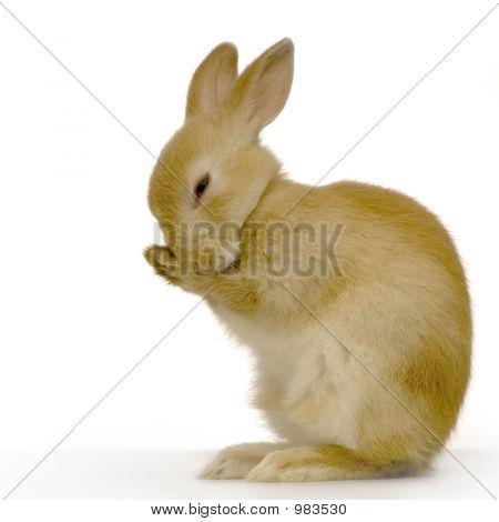 Shy Rabbit