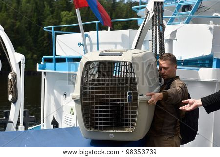 VALAAM ISLAND, RUSSIA - JULY 29, 2015: Vyacheslav Alekseev and others carrying the cage with Ladoga ringed seal from the ship. Animals were cured and released into the Ladoga lake