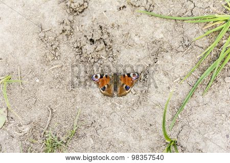 Butterfly Sitting On The Ground