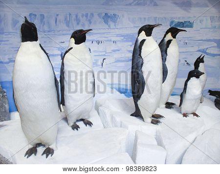 Stuffed Penguin Exibition