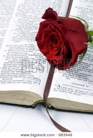 Bible And Rose 2
