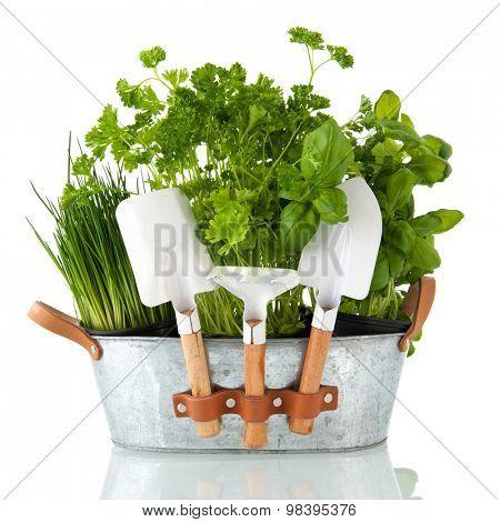 Kitchen herbs in bucket with garden tools