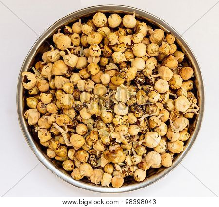 Ayurveda medicine Withania Coagulans Duna (flower) used as supplement to counter diabetes
