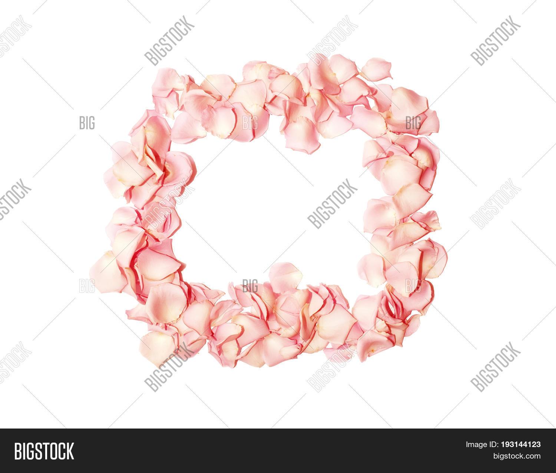 Pink Rose Petal Frame Image & Photo (Free Trial) | Bigstock