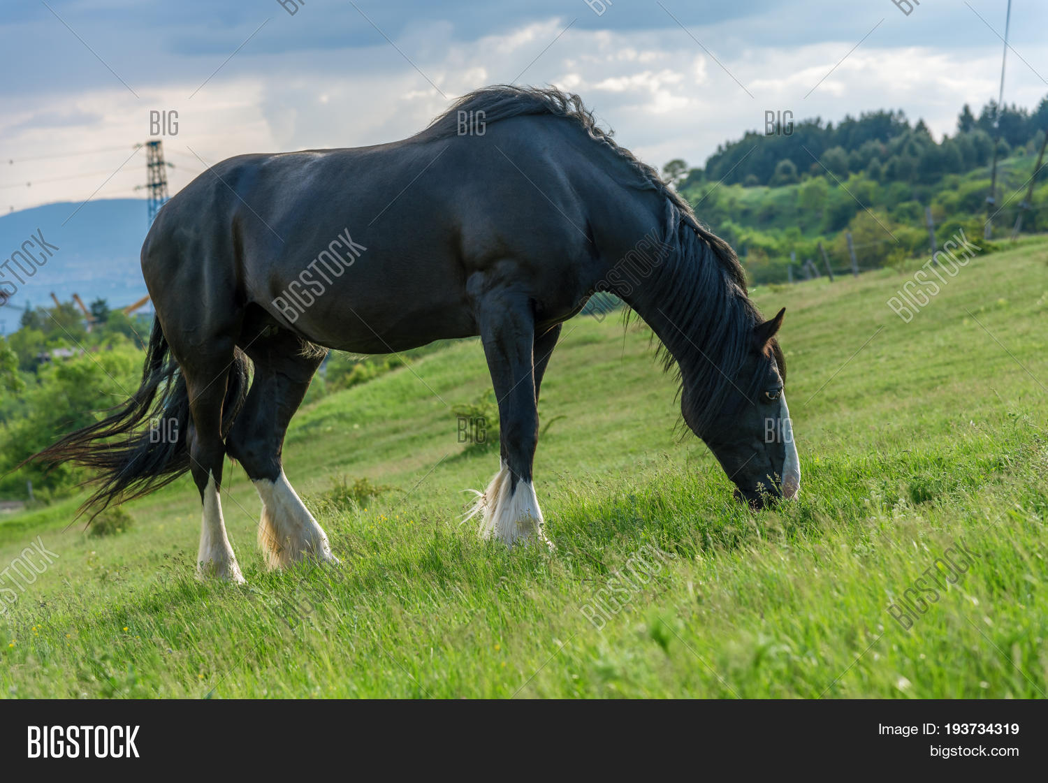 Friesian Horse Pasture Image Photo Free Trial Bigstock