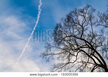 Bare branches of the autumn tree on the background of the cloudy sky with contrail