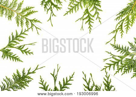 Wide arch shaped Christmas border on white background composed of fresh fir branches