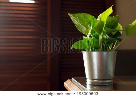 Small pot of indoor plant on the table