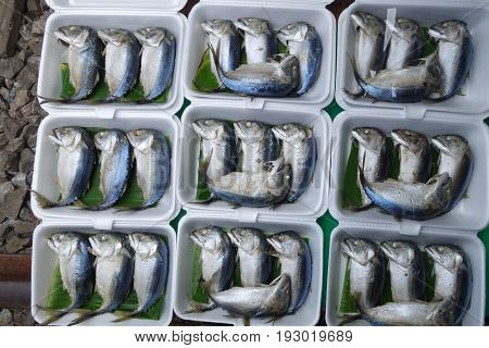 Mae Klong Mackerel Fish Sold On Market