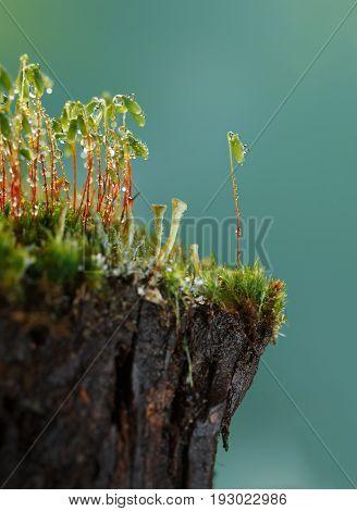 Moss On Stump