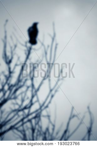 Black raven perched on a tree branch; blurred background