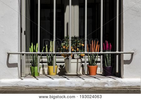 French grey window with shutters and bars colorful green yellow orange purple white pots pink flowers and kumquat