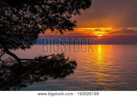 beautiful view of the sunset with pine trees in Brela Croatia