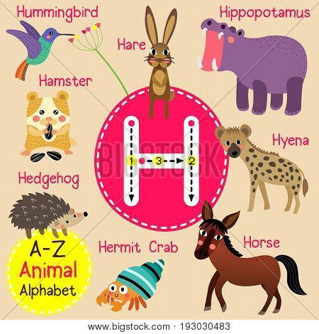 Cute children zoo alphabet H letter tracing of funny animal cartoon for kids learning English vocabulary vector Illustration.