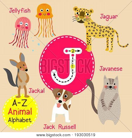 Cute children zoo alphabet J letter tracing of funny animal cartoon for kids learning English vocabulary vector Illustration.