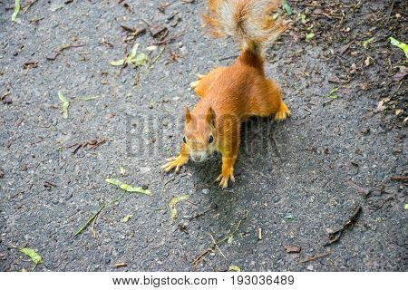 Squirrel ask for food at the University Botanical Garden named after Academician Fomin.