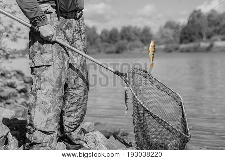 Black-and-white toned natural landscape with pond. Trophy fishing. Small goldfish on fishing line, old, used fish landing net with holes. Concept luck, fortune, case, finance, investment, success, active rest, hobbies, irony, countryside relaks