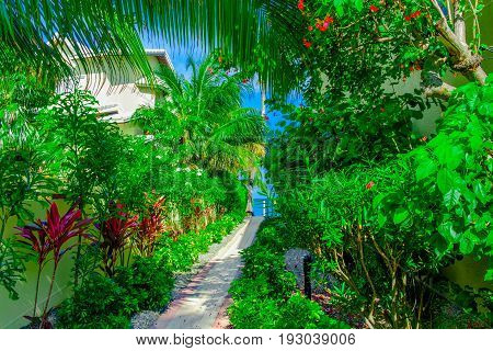 Paved stone pathway with lush vegetation on both sides leading to the Caribbean sea, Grand Cayman