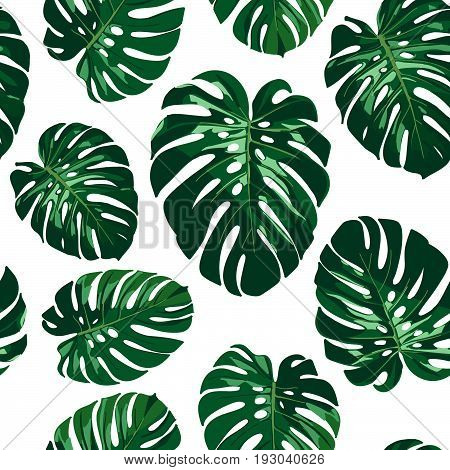 Seamless monstera palm leaves pattern for your summer background. Vector tropical illustration