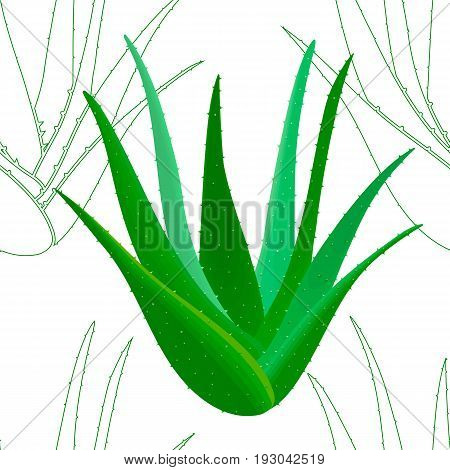 Aloe Vera seamless pattern whole and silhouettes. Aloe barbadensis, Star cactus, Aloin, Jafferabad. Herbal medicine plant for skin and hair care, cosmetics, ointments, perfumery, wrapping label