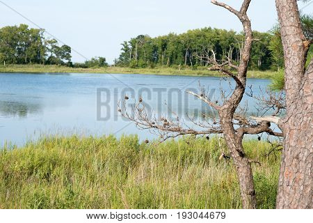 View of Thickets of reeds and Chesapeake Bay on Maryland Eastern Shore near Rock Hall, MD