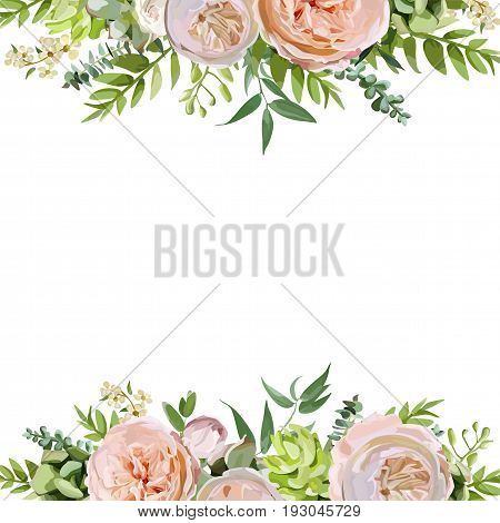 Vector floral design square card design. Soft pink peach english garden rose eucalyptus green fern leaves mix. Greeting delicate wedding invitation Frame border poster with copy space for your text
