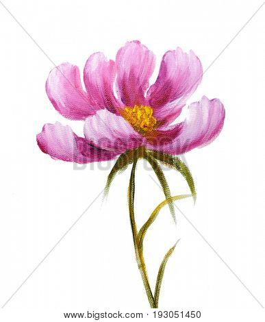 Pink cosmos flower. Oil painting on Canvas. Isolated on white background