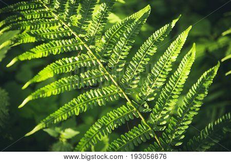 Forest fern leaf
