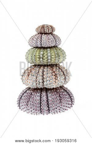 Stack of sea urchin skeletons or shells isolated on white background