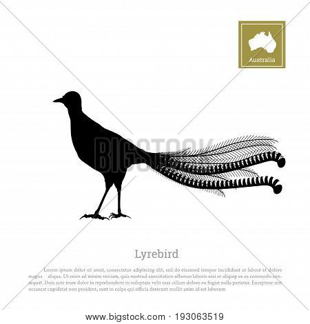 Black silhouette of lyrebird on white background. Animals of Australia. Vector illustration